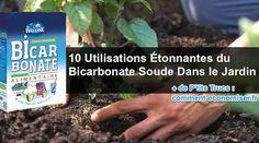 Le bicarbonate de soude a des dizaines d'usages dans la maison.C'est une façon peu coûteuse et saine de nettoyer votre cuisine et votre salle de bain.Mais qu'en est-il de l&rs Rose Trees, Agriculture, Planters, Tips, Brunch, Camping, Gardening, Flowers, Gardens