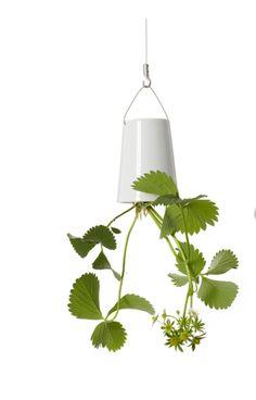 Boskke sky planters - Ceramic Medium