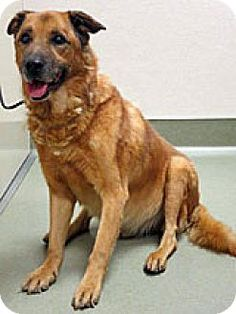 12yrs. old & possibly blind. Beautiful boy from California dreams of a loving forever home!****8/13/15**Wildomar, CA - Shepherd (Unknown Type) Mix. Meet 265725, a dog for adoption. http://www.adoptapet.com/pet/13609203-wildomar-california-shepherd-unknown-type-mix