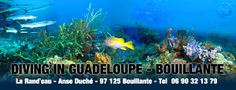 """Short breakdiving Guadeloupe, Diving in Guadeloupe, on the Basse-Terre, situated 3 km from the south of Bouillante center, the diving club La Rand'eau welcomes you to """"La Côte sous le Vent"""" in the little fishing village of Anse Duché. http://www.larandeau.com/diving-in-guadeloupe.html"""