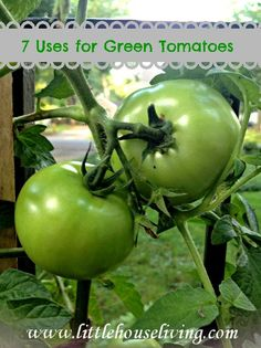 Have green tomatoes that have fallen off the plants? Here are 7 ideas on how to use them! We love adding them into stir fry!