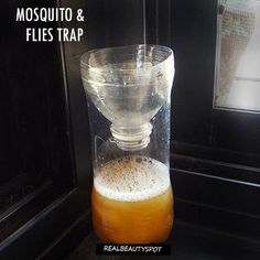 Mosquitoes and flies can materialize in even the most spotless kitchens. Until recently, I had no idea that they could be dealt with in a safe, effective, and cheap manner using apple cider vinegar and liquid soap! Apple cider vinegar works as an attractant because of its strong sweet odour while the detergent decreases the vinegar's surface tension so that when a fly touches the surface it immediately sinks and drowns. It's particularly satisfying to see the collection of flies you have…
