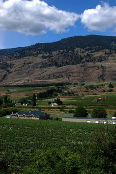 Silver Sage Winery Oliver BC