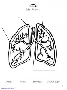 Human Body: Respiratory System - A Moment in our World