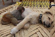 Interspecies sleepy-byes VI