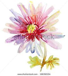 2017 trend Watercolor tattoo - Beautiful chrysanthemum flower, Watercolor painting - stock photo...