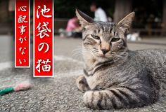 The Ferociously Nonchalant Cats of Ikebukuro (Alpha 7S GALLERY)