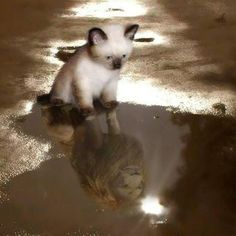 Imagine what you'll become like that little kitty Animals And Pets, Baby Animals, Funny Animals, Cute Animals, I Love Cats, Big Cats, Cute Cats, Kittens Cutest, Cats And Kittens