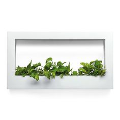 Fabio Bortolani: TV  Planter White, at 18% off!