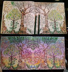 enchanted forest #enchanted #forest #enchantedforest
