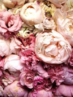 flower friday :D