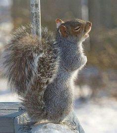 Eekhoorn heeft het koud, brrrr.