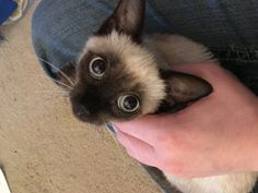 Fearful Roadside Kitten Experiences Love for the First Time, It Changes Everything - Love Meow