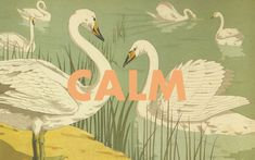 Calm Swan Wallpaper via Design Love Fest