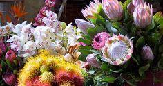 1.2.10-flowers-fruit02.jpg