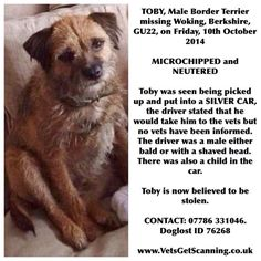 This is Toby the border terrier.. Stolen last week. If you have ANY info, please help @FindTobyTerrier  Please.