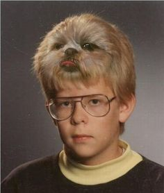How much is that doggie in the bouffant?
