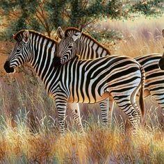 Make your cheapest trip with us to be at Mikumi national park / Tanzania Contact us. ✉info@theinsighttanzaniasafaris.com