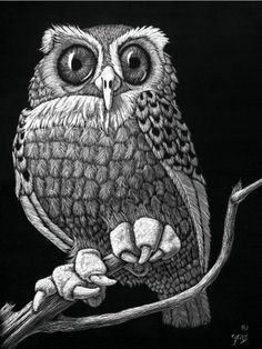 The Owl Set , 2 of each, are note cards from original scratchboards By Robin Grass on etsy. I need the originals! Love ~~the eyes, so detailed! Black And White Owl, White Pen, Animal Drawings, Art Drawings, Black Paper Drawing, Scratchboard Art, Scratch Art, Nature Artwork, Owl Print