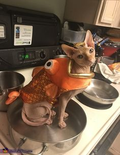 Sphynx Kitty - December 25 2018 at I Love Cats, Crazy Cats, Crazy Cat Lady, Cute Cats, Funny Cats, Cute Cat Costumes, Pet Costumes, Pretty Cats, Beautiful Cats