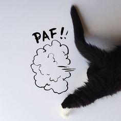 Pilu , My cat in Wonderland, Tuxedo cat , London Cat , Longhair , pink nose , pet , animal , cat blog , kitten , sketch , doodle
