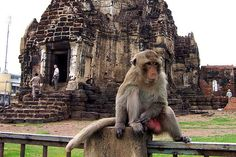 Read Lopburi Banquet: a guide to Thailand's monkey festival