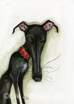 Greyhound Art Print - D...
