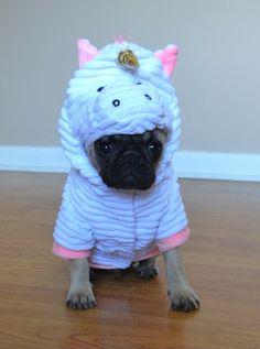 Our Pug Unicorn Boo #pugcostume #pugshalloween #pugunicorn #mylittlepony