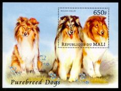Rough Collie Dogs MNH S/S stamp