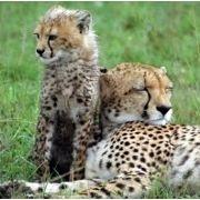 What scientific studies reveal about attachment parenting.