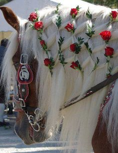 Harness carriage horse - Beautiful Mane