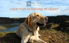 Although here is rainy, I am always looking for sunshine in my heart#AblePets