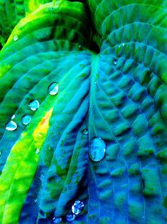 Green & Turquoise Leaf