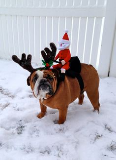 """Santa lost his sled and presents will be mailed FED EX!""HIS FACE!!!...hahaha!!! #dogs #pets #Bulldogs"