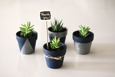 DIY Potted Succulent Pots | The Perfect Wedding Favor