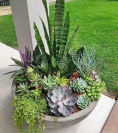 Succulent Gardening, Succulents Garden, Container Gardening, Succulent Outdoor, Succulent Planters, Propagate Succulents, Gardening Zones, Succulent Wreath, Cement Planters