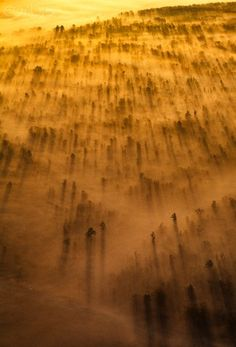 Aerial view of fog and trees at sunrise, Maryland, USA #natural #light