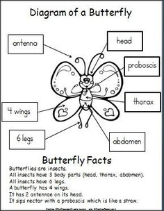 FREE Printable Butterfly Diagram