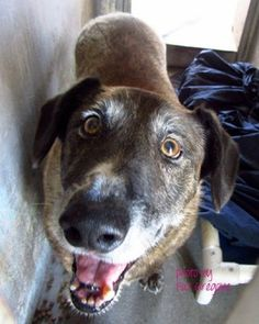Friendly, owner-surrendered 14-year-old dog needs a new home