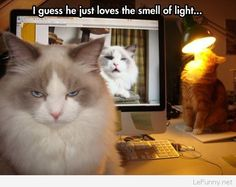 Funny cat and a lamp | Funny Pictures | Funny Quotes | Funny Jokes – Photos, Images, Pics
