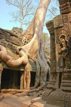 La nature reprend ses droits temple Le ta Prohm Cambodge