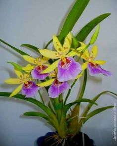 How to Plant Potted Flowers Outdoors in the Soil : Garden Space – Top Soop Strange Flowers, Rare Flowers, Exotic Flowers, Amazing Flowers, Beautiful Flowers, Orchid Plants, Exotic Plants, Orquideas Cymbidium, Plante Carnivore