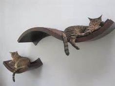 cat shelf...these are awesome