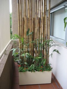 Screen Protector Plant Plants Bamboo pole wall - Balkon Deko Ideen -Balcony Screen Protector Plant Plants Bamboo pole wall - Balkon Deko Ideen - Bamboematten op rol 22 plants perfect for outdoor privacy 17 Wall, Bamboo, Balcony Privacy, Bamboo Poles, Small Balcony Design, Plant Wall