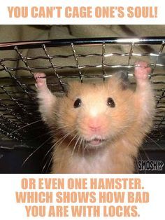 ( Hamster Pull Ups ) very funny Best Pets For Kids, Best Small Pets, Funny Animal Images, Funny Animals, Cute Animals, Animals Images, Hamsters As Pets, Cute Hamsters, Rodents