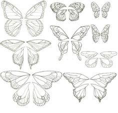 Butterflyes wings