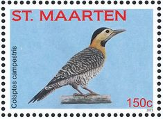 Campo Flicker stamps - mainly images - gallery format