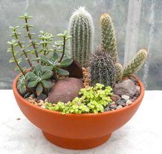 Cactus garden cactus cactus terrarium, cactus plants и mini Mini Cactus Garden, Succulent Gardening, Greenhouse Gardening, Cactus Flower, Flower Bookey, Flower Film, Flower Pots, Succulent Ideas, Cactus Garden Ideas