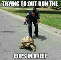 Funny pictures about High Speed Chase. Oh, and cool pics about High Speed Chase. Also, High Speed Chase photos. Funny Cute, Really Funny, Hilarious, Animal Memes, Funny Animals, Cute Animals, Animal Humor, Funny Photos, Best Funny Pictures