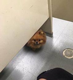 Wrong place Wrong time. https://ift.tt/2HXkFCJ #Puppy #Puppies #Pics #Dog #Adopt #Pets #Animals